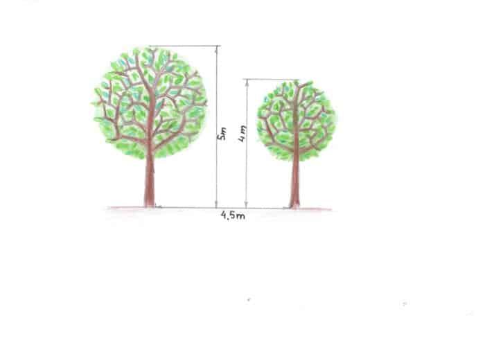 razmak sadnje drveća