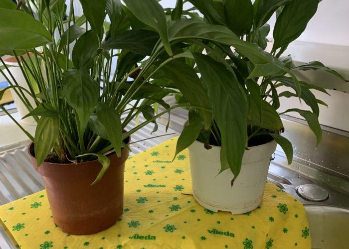biljke se same zalijevaju