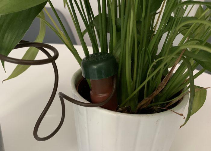 samozalijevanje sobnog bilja