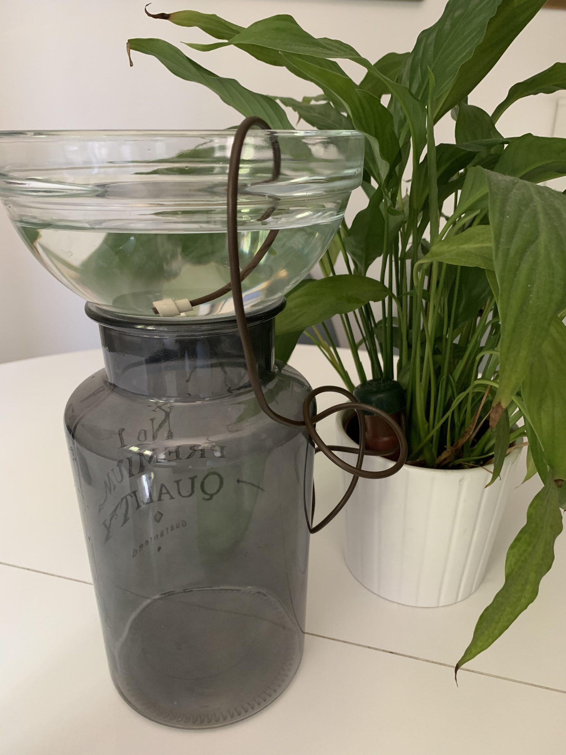 zalijevanje sobnog bilja na godišnjem odmoru