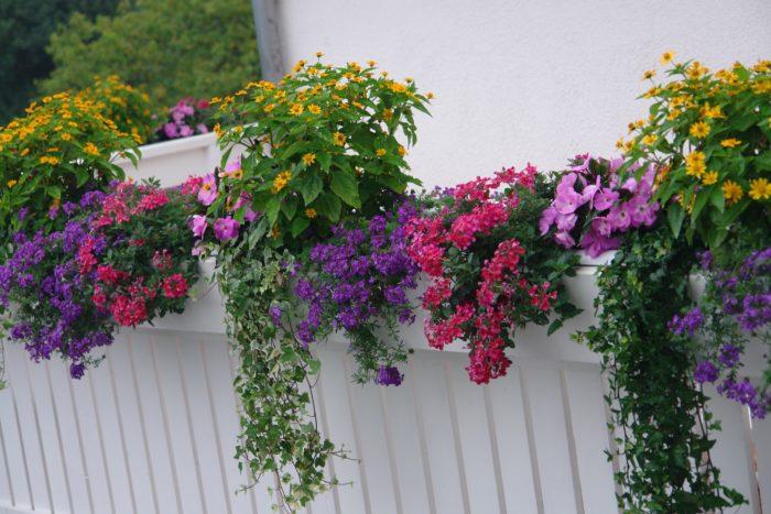 cvjetna kombinacija za balkon