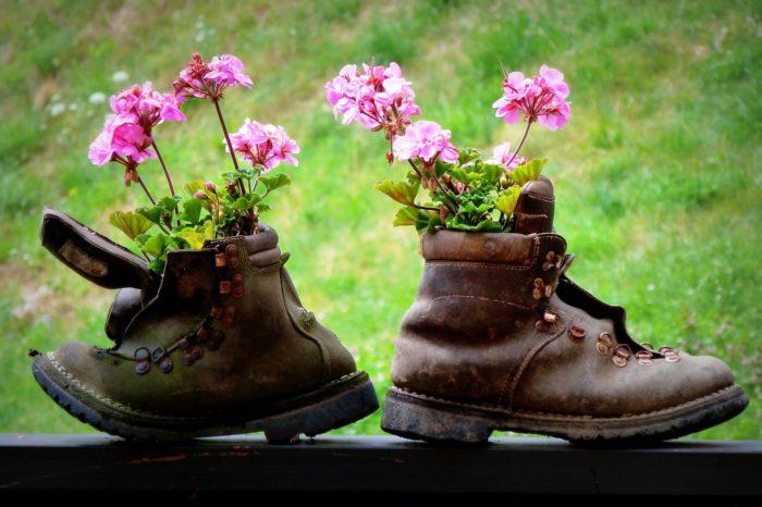 sadnja u cipeli
