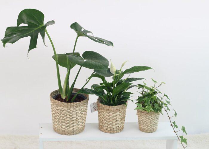 biljke u kupaonici