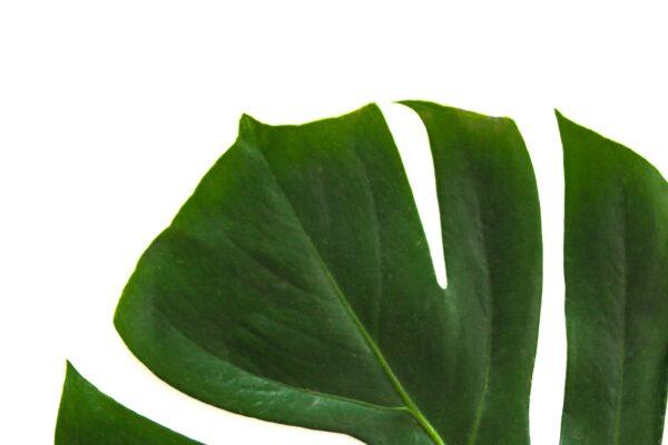 sobno bilje