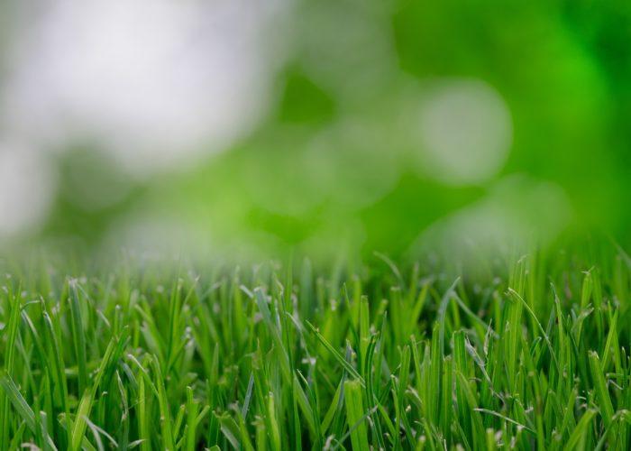 travnjak